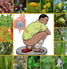 18 POWERFUL MEDICINAL PLANTS FOR TREATING DIARRHEA.   I suppose each and everyone of us at some point in our lifetimes has suffered from diarrhea! Maybe not the chronic diarrhea but probably the mild ....   #AcoruscalamusLinn #DiarrheaTreatment #Goldenapple #Goldenseal #Moringa #Peppermint #Soursop.