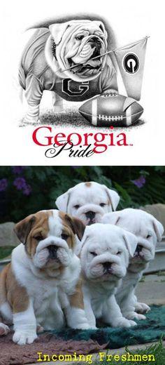 University of Georgia Bulldogs - incoming freshmen
