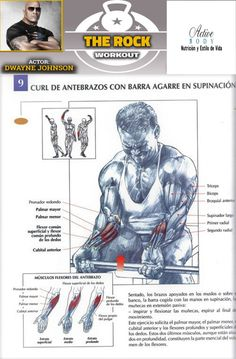 Curl de antebrazos con barra agarre en supinación Dwayne Johnson, Health And Fitness Articles, Health Fitness, Calisthenics Training, Stretching Exercises, At Home Gym, The Rock, How To Lose Weight Fast, Gym Workouts