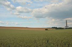 Wheat fields.