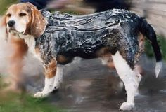 - Dog Shampoo Solid Bar Recipe, Aromatherapy & Soap Making Shop- Aromatherapy and Soap Making Supplies, Soapmaking Supplies, handmade soap, soap making products THE PONTE VEDRA SOAP SHOPPE