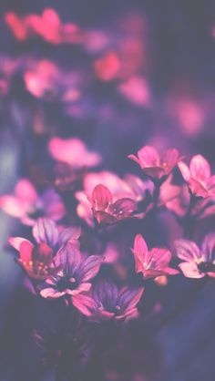 alternative, background, flowers, heart, inspiration, iphone, photography, pink, vintage, wallpaper