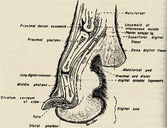 Anatomy dog paw pads Dog Paw Pads, Dog Skeleton, Cat Paws, Chester, Anatomy, Google Search, Cats, Gatos, Cat