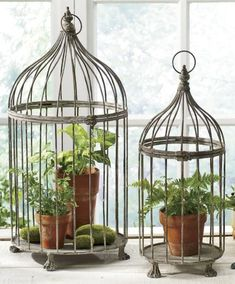 Love wired birdcages . . . can put plants, candles, and collectables in them.