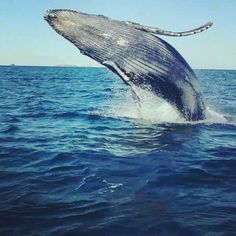Avistamiento de Ballena Jorobada... ISLAS MARIETAS, SNORKELING Incluido...  Vivir de cerca esta experiencia, con el mamífero más grande del planeta será algo inolvidable, una experiencia única y emocionante de contacto con la naturaleza. Además de la ballena, frecuentemente observamos delfines y muchas aves, también visitaremos las Islas del Coral y del Cangrejo, Punta Mita y las Islas Marietas.. Reserva tu lugar en: ecoviajesmexico@gmail.com https://www.facebook.com/events/647508821978904/