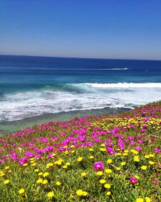 Flowers on shoreline | http://instagram.com/chriscillaf