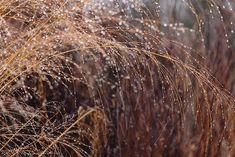 Siergrassen, makkelijk in onderhoud, sterk en vele soorten. De meeste grassen prefereren volle zon, sommige doen het ook prima in de schaduw