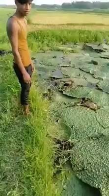 Wow Video, Nature Gif, Random, Beautiful, Casual