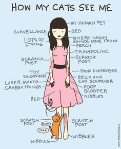 How Cats See Me by aprintaday, via Flickr - yes, this is about right.