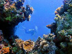 El Gouna - Red Sea   #RedSea #Scubadiving #Discover
