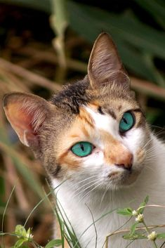 A cute cat with incredibly beautiful eyes #cute #cat #eyes #cuteanimals #TheWorldIsGreat