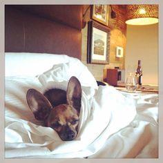 Pedro got the VIP (Very Important Pooch) treatment at Carmel Valley Ranch. (Instagram: mkmspagirl)