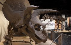 "Taking your kids our museum? Here are 5 Dino-mite Tips for Taking Kids to Visit ""The Last American Dinosaurs""!"
