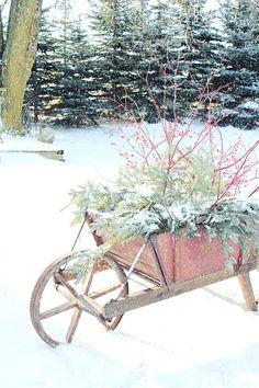 Blue spruce, crisp, white snow, red berries