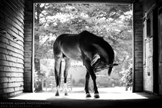 www.horsealot.com, the equestrian social network for riders | Equestrian Photography : Payton Adams.