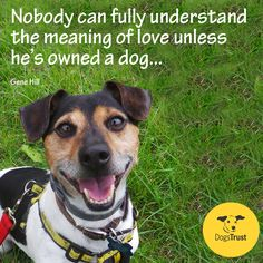 """""""Nobody can fully understand the meaning of love unless he's owned a dog. Rescue Dog Quotes, Rescue Dogs, I Love Dogs, Cute Dogs, Dogs Trust, Meaning Of Love, Old Dogs, Animal Quotes, Dogs And Puppies"""