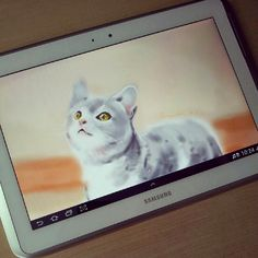 My Sketch the cat with Galaxy note 10.1 ;)