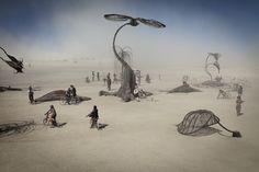 Desert Garden at Burning Man Festival