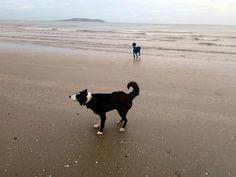 Dog walks near dublin: portmarnock beach Dog Paws, Dog Walking, Dublin, Walks, Beach, Dogs, Outdoor, Outdoors, The Beach