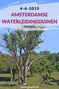 Tijdens mijn derde bezoek aan de Amsterdamse Waterleidingduinen in 2015 maakte ik opnieuw een wandeling vanaf de ingang Panneland en spotte opnieuw veel damherten en genoot van de schitterende natuur. Kijk je mee wat ik allemaal zag? #awd #amsterdamsewaterleidingduinen #damhert #wandelen #hiken #natuur #jtravel #jtravelblog #fotos