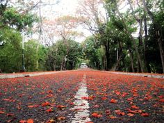 UP ground -diliman, Philippines