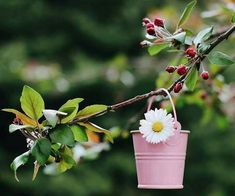 Happy Flowers, Beautiful Flowers, Daisy Love, Beautiful Fantasy Art, Kawaii Wallpaper, Perfect World, Floral Border, Border Design, Miniatures