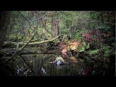 Debussy Prélude à l'après-midi d'un faune  Orshestre Symphonique sous la direction de Piero Coppola  French Gramophone CF2795△Ⅱ T1, CF2796△Ⅰ1927. Recorded Paris