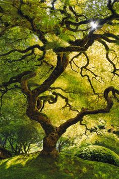 Inner peace by Peter Lik. I Love the light dancing. Inner peace by Peter Lik. I Love the light dancing with the leaves. I have a strong desire to scale these branches all over to the top. All Nature, Nature Tree, Amazing Nature, Nature Source, Spring Nature, Flowers Nature, Peter Lik Photography, Tree Photography, Weird Trees