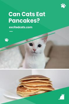 Can cats eat pancakes? In a nutshell, only in moderation. But before deciding to add pancakes to our feline friend's diet, we need to understand why this popular breakfast choice isn't a great idea. Excited Cat, Live Long, Cat Food, Cat Breeds, Yummy Treats, Pancakes, Good Food, Kitty, Popular