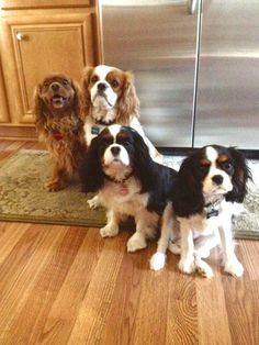 Line up for the picture! Maggie, Freddy, Holley and SADIE