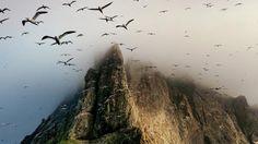 成群於群島間狹窄岩架建巢的塘鵝,而外赫布里底群島則是世界範圍內塘鵝最大規模的棲息地。