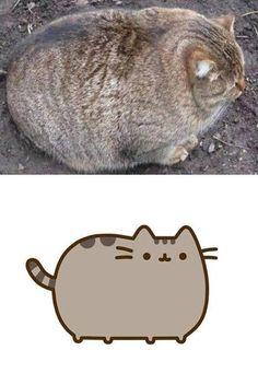 the real life Pusheen cat