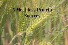 5 Meat-less Protein