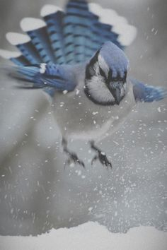Blue jay - such beautiful birds, and sociable! Pretty Birds, Love Birds, Beautiful Birds, Animals Beautiful, Cute Animals, Simply Beautiful, Kinds Of Birds, Mundo Animal, All Gods Creatures