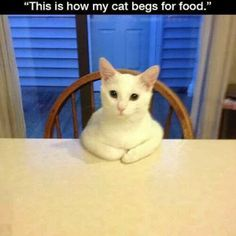 Funny Cats Compilation Funny Cats Videos Compilation - Funny Animal Quotes - - Too cute. In that order The post Funny Cats Compilation Funny Cats Videos Compilation appeared first on Gag Dad. Funny Animal Memes, Funny Cat Videos, Animal Quotes, Funny Animal Pictures, Funny Animals, Cute Animals, Funniest Animals, Funny Photos, Funny Memes