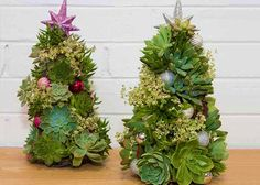 25 Modern Ideas to Design Live Christmas Trees with Succulents