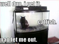 http://icanhascheezburger.files.wordpress.com/2008/01/funny-pictures-cat-fishtank.jpg