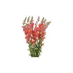 Wedding Flowers ❤ liked on Polyvore