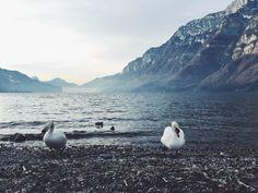 Narty za granicą: LAAX i Kronplatz Penguins, Vsco, Animals, Animales, Animaux, Penguin, Animal, Animais