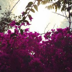 Bougainvillea, Spanish beauty 🙏🏻 . . . . #bougainvilleas #spain #españa #begur #travel #photography #travelgram #travelphotography #europe #flowers #instalove