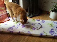 Ebay, Cats