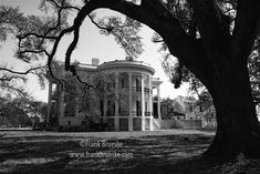 Nottoway Plantation House, located at White Castle, LA between New Orleans and Baton Rouge, just a few hundred feet from a huge dike that holds back the flood waters of the Mississippi River. ~  Franklin (Frank) Brueske