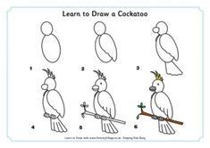 Learn to Draw a Cockatoo