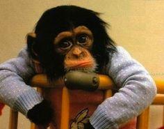Monkey in a sweater <3 <3 <3