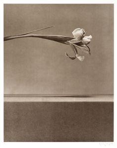Robert Mapplethorpe, 'Untitled,' 1983; published 1984, Los Angeles Modern Auctions (LAMA)