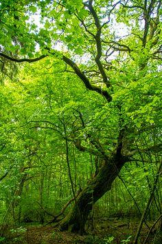 Vaisakon kaunis lehtometsä on Viurilanlahden reunalla Halikonlahden länsirannalla. http://www.naejakoe.fi/luontojaulkoilu/vaisakon-lehto/ #Salo #luonto #visitsalo #kesä