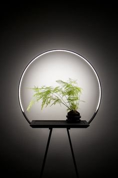 design - au 34 halo planter with a special LED light to enhance growth Licht Box, Led Licht, Plant Lighting, Home Lighting, Hallway Lighting, Office Lighting, Ceiling Lighting, Bedroom Lighting, Picture Lighting