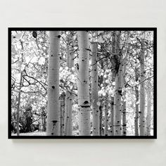 Aspen trees print // via West Elm