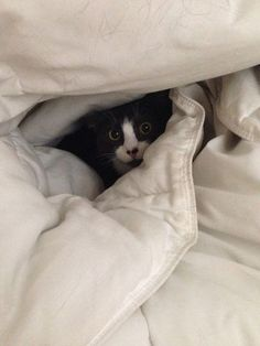 Comforter-ble.   LOL.  Looks like my last kitty, Mose!