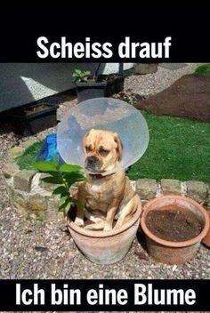 Resignation eines Hundes